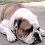 bully déprimé